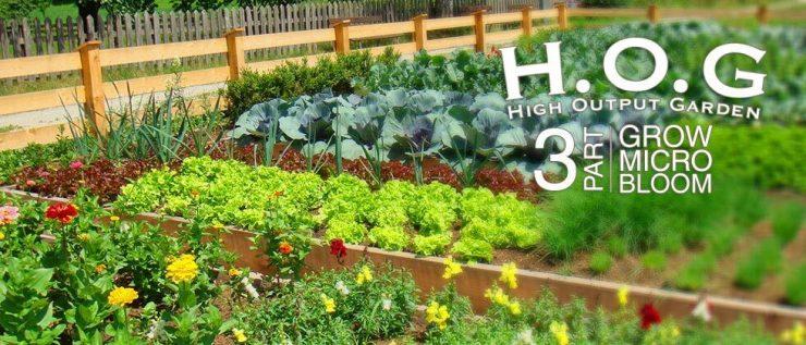 hog 3 part banner