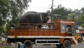 Elephant in the truck