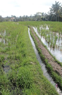 Irrigation Dirt