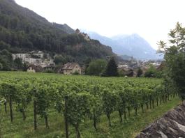 Grape Fields in Vaduz