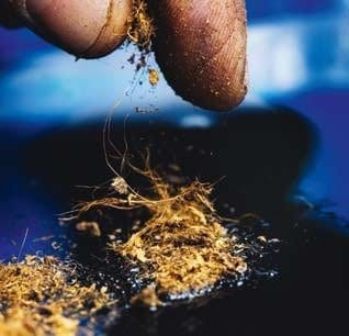 Peat moss can be highly effective for cleaning up oil spills. (Photo: Sverre Jarild)