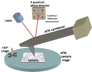 Typical atomic force microscopy set-up