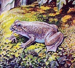 frog-newsroom