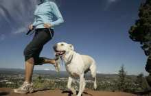 Running Buddies Enrichment Program Partners Joggers with Shelter Dogs