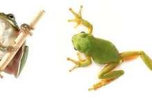 Frog-like robot will help surgeons