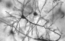 Epilepsy Cured in Mice Using Brain Cells