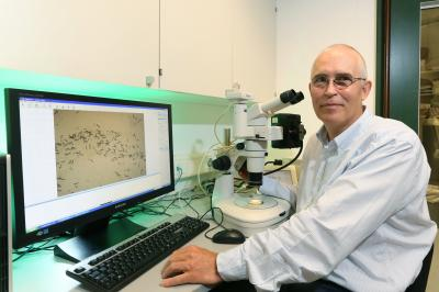Slowing the aging process -- only with antibiotics