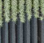 Artificial Forest for Solar Water-Splitting - Artificial Photosynthesis