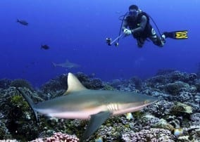 Sharks worth more in the ocean than on the menu