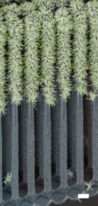 Peidong-forest-tree-143x300