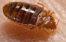 Got Bed Bugs? Use This New, Cheaper, More Effective, DIY, Low-Cost Trap To Find Out