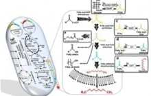 KAIST announces a novel technology to produce gasoline by a metabolically-engineered microorganism