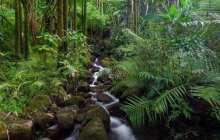 Wildlife face'Armageddon' as forests shrink