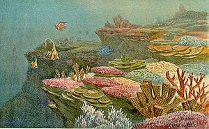 300px-Ancient_coral_reefs