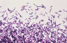 Fecal transplant pill knocks out recurrent C. diff infection, study shows