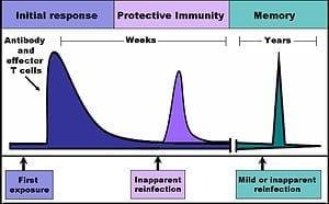 300px-Immune_response