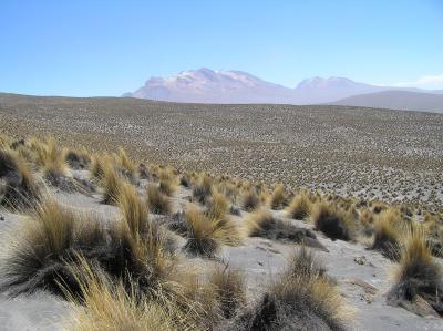 Warming will disturb balance of soil nutrients in drylands