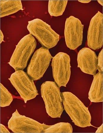 spores-hi-res-350x453