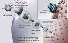 Fixing a body's broken genes is becoming possible