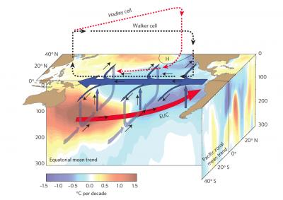 This is a schematic of the trends in temperature and ocean-atmosphere circulation in the Pacific over the past two decades. Color shading shows observed temperature trends (