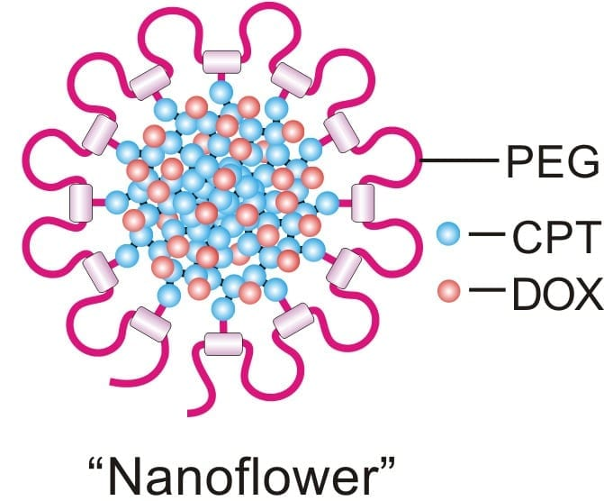 """Early tests of the """"nanodaisy"""" drug delivery technique show promise against a number of cancers. Image credit: Ran Mo."""