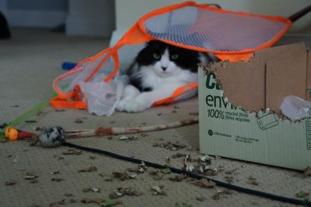 Kitty Demolition by Purr