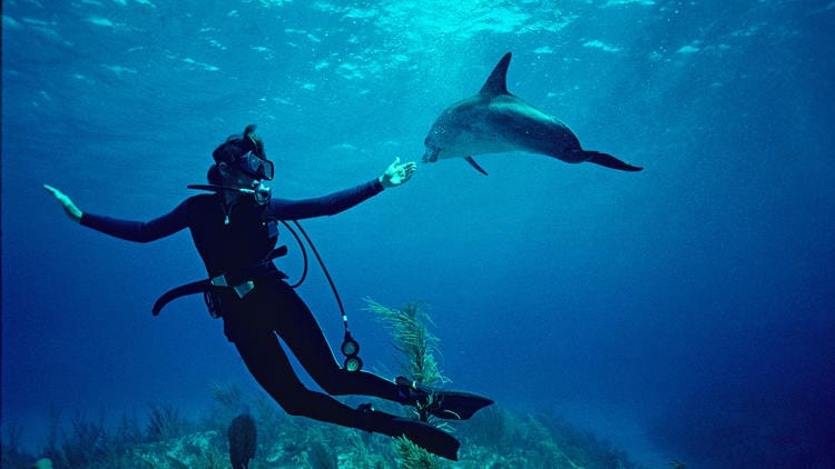 The upcoming Netflix documentary Mission Blue joins the movie's central subject, Sylvia Earle, on a journey to explore the changes in the world's oceans over her lifetime. Courtesy of Netflix