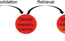 Treating Mental Illness by Changing Memories of Things Past