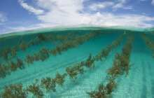 Food, fuel and more will be produced in sea farms of future