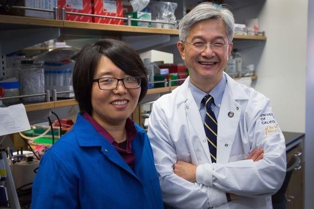 Reed Hutchinson/UCLA Xinshu (Grace) Xiao and David Wong in Dr. Wong's laboratory.