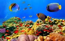 Ocean Life Faces Mass Extinction, Broad Study Says