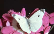 Butterflies heat up the field of solar research with up to 50 percent increase