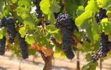 Artificial intelligence improves fine wine price prediction