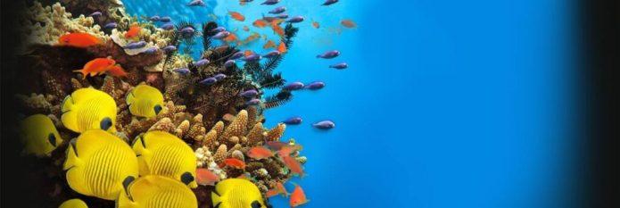 via www.aqua.org