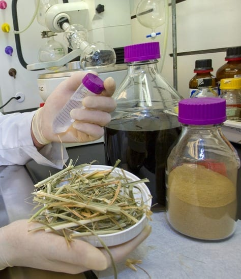 LBL JBEI researcher Brad Holmes with switchgrass - lignocellulose deconstruction