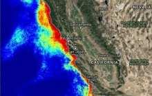 Spread of algal neurotoxin domoic acid through marine food web broke records in 2015
