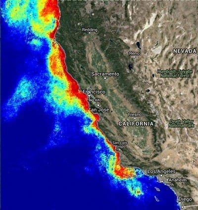 This map from a forecasting model of harmful algal bloom conditions along the California coast shows the bloom of toxic Pseudo-nitzchia diatoms (red) covering the entire coastline north of Santa Barbara in August 2015. (www.cencoos.org/data/models/habs)