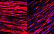 Rapidly Building Arteries that Produce Biochemical Signals