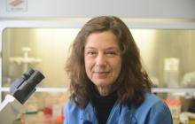 Modified flu virus can'resensitize' resistant pancreatic cancer cells to chemotherapy