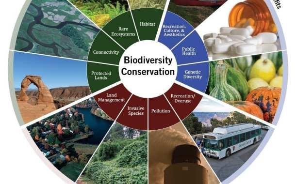 Biodiversity falls below 'safe levels' globally