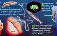 Revolutionary male contraceptive could change approach to reproductive health