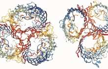 Watching the evolution of a virus in a flask in real time