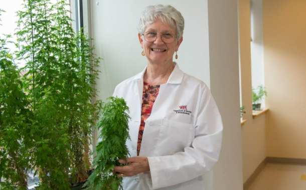 Plant therapy using Artemisia annua can cure drug-resistant malaria