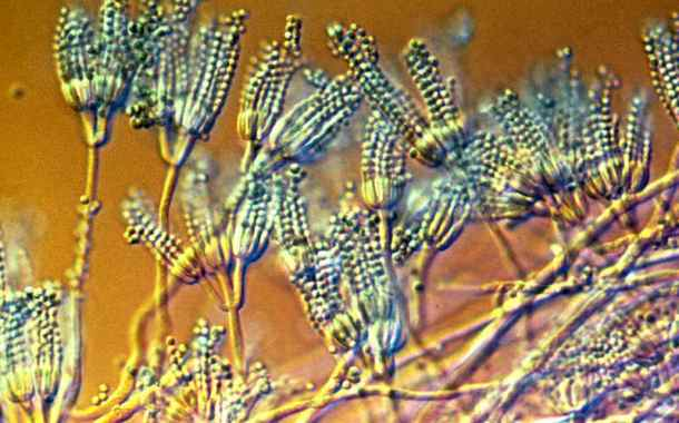 New antibiotics produced from fungi show promise