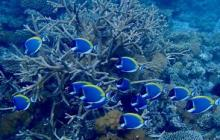 Refuge could preserve climate-sensitive corals