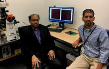 A way to stop macular degeneration?