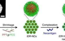New nanovaccine can carry multiple weapons to fight tumors