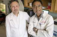 Established lung fibrosis can be reversed