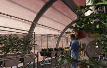 The plant hormone strigolactone could make space farming possible