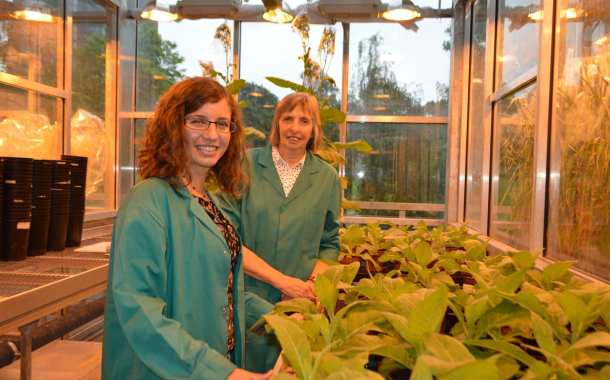 Accelerating the process of photosynthesis to increase crop production